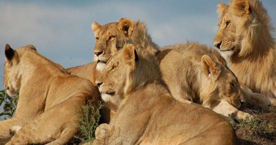 AA-Lodge-Masai-Mara29.jpg