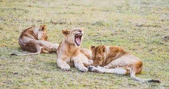 Simba-Lodge-Masai-Mara-Cover-2-2.jpg
